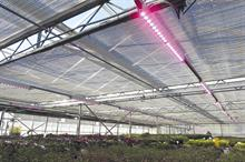 Protected crop structures - LEDs good for business