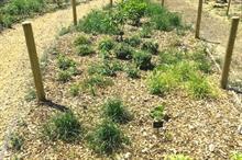 Brooksby Melton College and De Montfort University's molecular verification study finds 30% plant IDs 'mistaken'