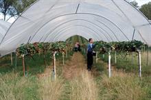 Top UK Fruit Producers 2020 - 31 - 35