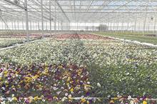 Ornamentals Production Sector Review 2019