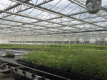 Plant quality delivered faster with AngelaWeb at New Leaf Plants