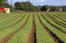 Scottish forestry nursery gears up for devolved future