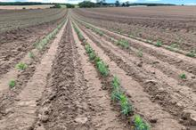 TreeTape innovation achieves close to 2,000% increase in seed propagation and planting efficiency