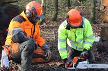 Can common international standards help relieve arboriculture's skills shortages?