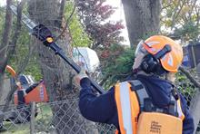 Tested and reviewed - Arboriculture kit