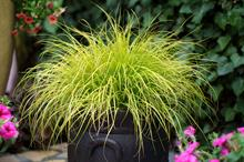 Plantipp: top 5 new plant varieties for 2021