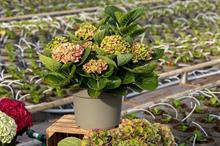 Top 10 sustainable ornamentals products feature indoor-outdoor plants