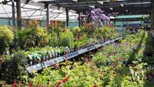 British Protected Ornamentals Association demands radical reform of levy body