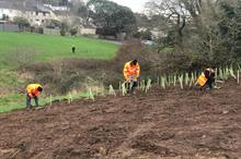 Teignbridge Council partners with idverde to plant 1,500 trees in February