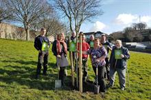 Council and civic bodies unite behind city tree strategy