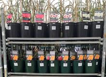 What's in short supply at garden centres?