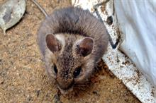 Rodenticides: controlling rodents in ornamentals production setting