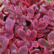More Plantarium new plants revealed