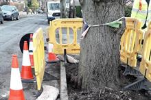 Amey and campaigners begin joint assessments of contested Sheffield trees