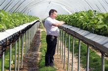 Coronavirus challenges mean early-harvesting fruit farm 'could disappear', says owner