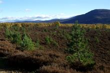 "Scots government seeks views on forestry policy ""for next 100 years"""