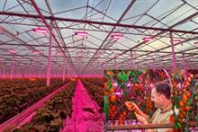 How LED grow lights can help  improve crop production