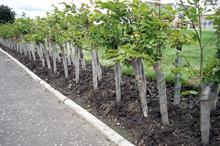Tree planting - what are the benefits of planting trees?