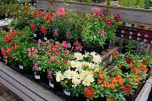 How are business rates hikes damaging garden retailers?
