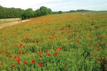 Top 50 UK Landscape and Maintenance Contractors: 1 - 10