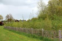 """""""Tiny forests"""" can be biodiversity hotspots in urban environments, say Dutch"""
