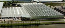 Syngenta opens tomato breeding demonstration centre