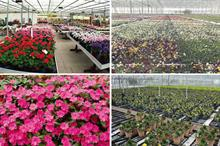Top 30 Ornamentals Nurseries by Turnover 2017