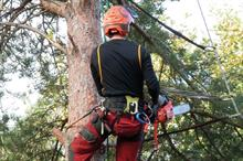 Top 30 UK Arboriculture Businesses 2019: 21 - 30