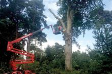 Top 30 UK Arboriculture Businesses 2019: 11 - 20