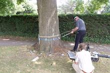 Horticulture Week Custodian Award - Tree Service of the Year