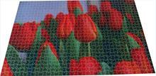 Dutch consortium unravels first tulip genome