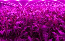 Light Science Technologies wins Innovate UK funding to develop sensor technology for vertical farming