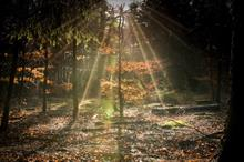 Woodland Trust to sponsor research aligned with native woodland report
