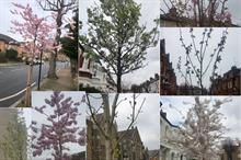 Borough hails push on street tree planting