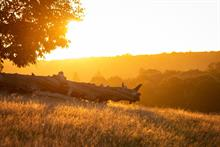 Election candidates challenged to safeguard UK's green spaces