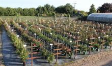 Top rose breeders to take part in Whartons Roses trial