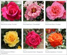 Whartons Nurseries partners  with Joy of Plants for webshop image library