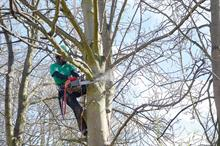 Horticulture Week Business Awards - Arboriculture Contractor of the Year