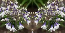 Wyevale Garden Centres identifies RHS Chelsea Flower Show plant trends