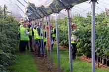 What 'easy wins' are open to growers to boost productivity?