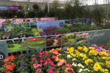Allensmore Nurseries pleased with 2020 financial performance
