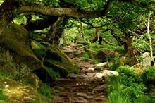 What does the revised NPPF mean for ancient trees and woodlands?