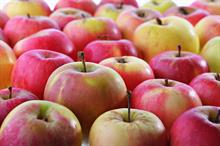 School apple company seeks grower supplier