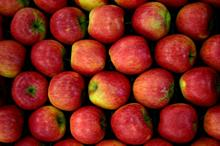 """EAP offers to match visitors to apples at pop-up """"apple store"""""""