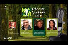 Is tree planting the most important issue in arboriculture today?