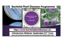 Plant Health Week hears of bacterial plant diseases projects