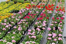 Garden industry set for good May bank holiday as weather-driven upturn in sales continues