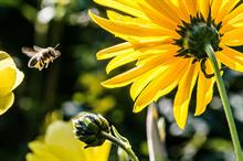 Homebase/Bunnings to stop selling neonicotinoid-treated plants