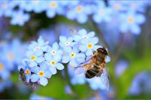 What can the horticulture sector do about insect decline?