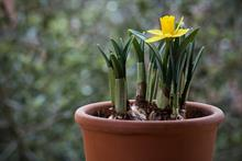 Dry weather leads to some bulb unavailability